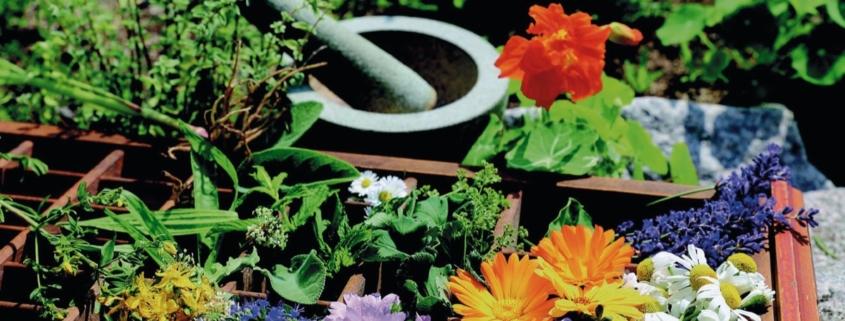 Angewandte Pflanzenheilkunde